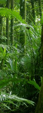 rainforestv